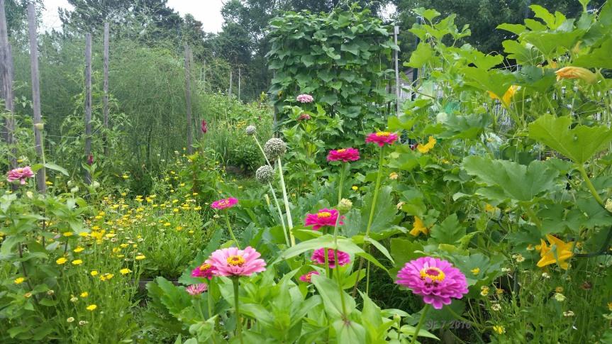 Hilltop Garden with Pollinator Attractors