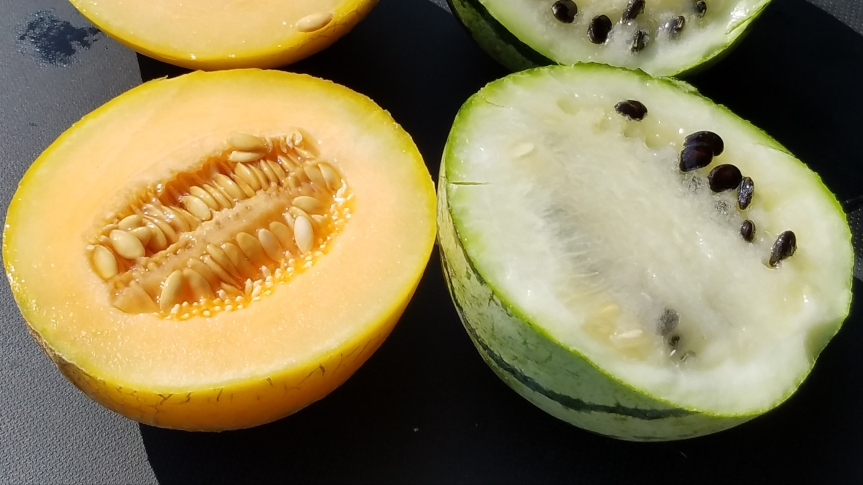 Melons – Sweet Melons