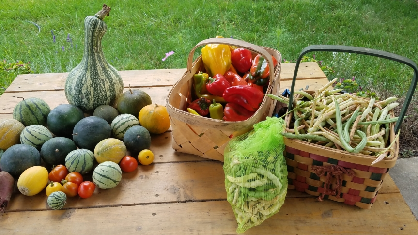 Garden Bounty, Seedsaving and Pests